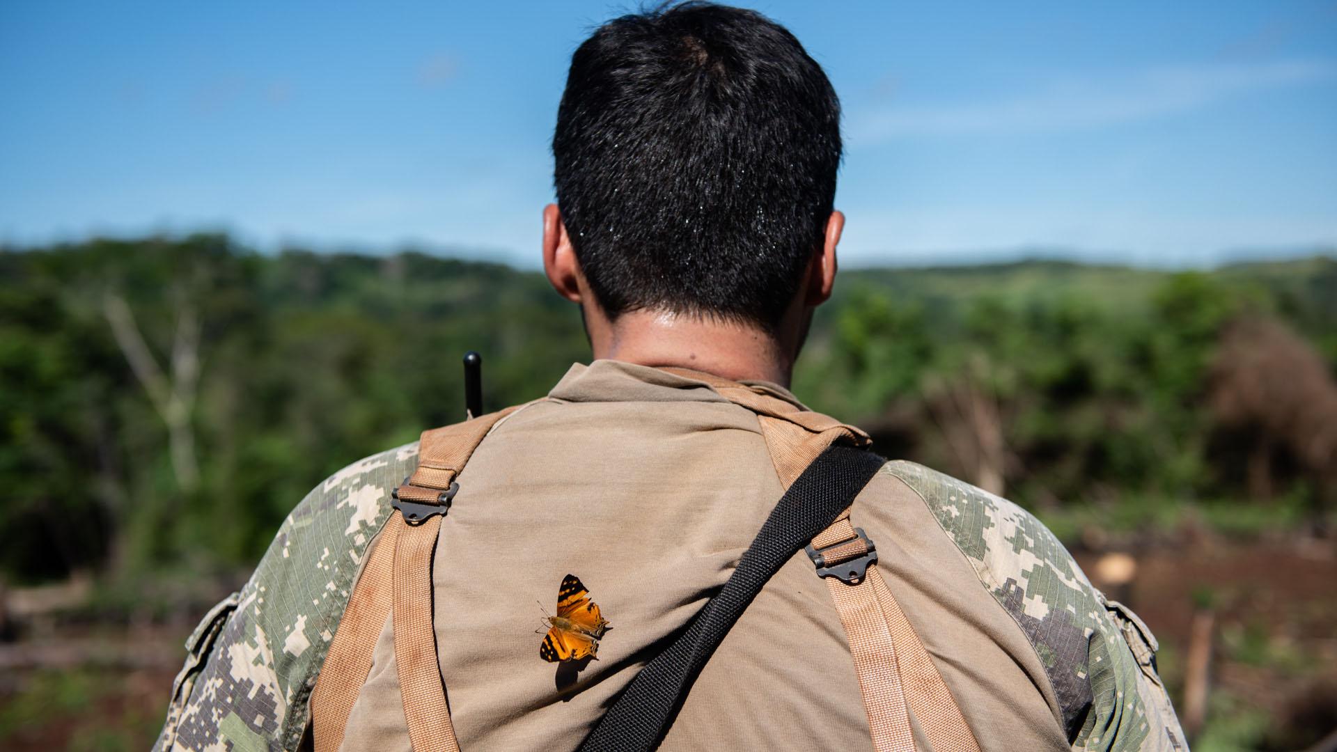 Las mariposas son una figura común en la espesura.