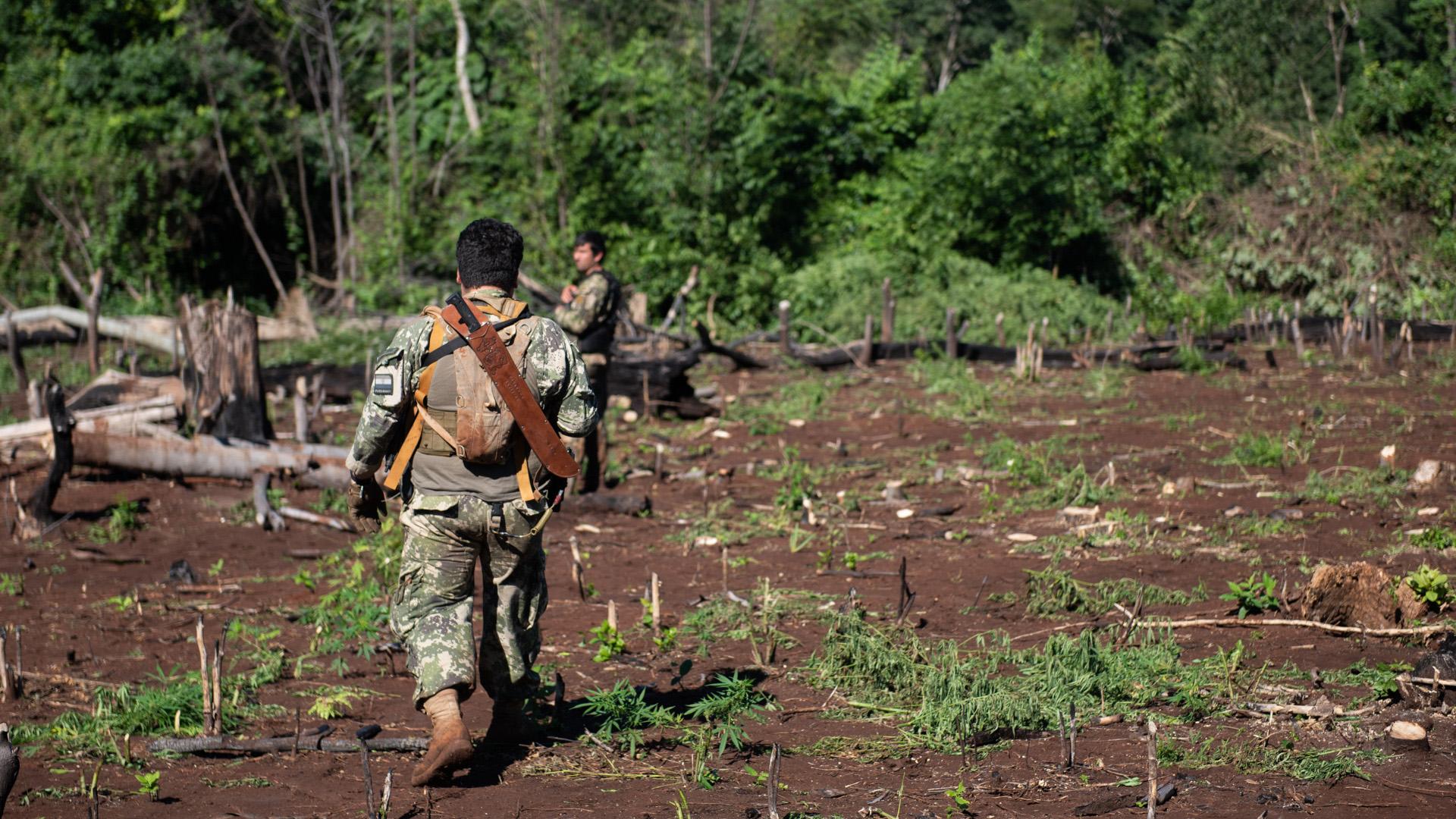 Hombres del SENAD y de las fuerzas especiales paraguayas: los jornaleros a sueldo de los narcos talaron la reserva forestal de una estancia.