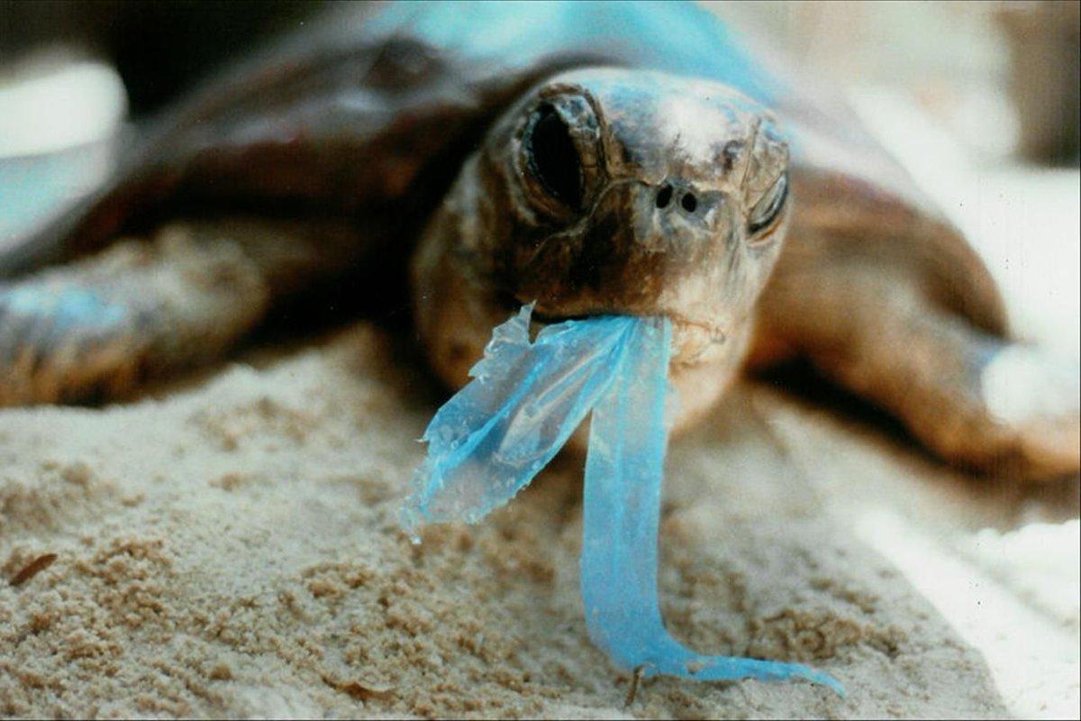 Día Mundial del Medio Ambiente: el efecto bumerán de los microplásticos en el océano para la salud humana - Infobae