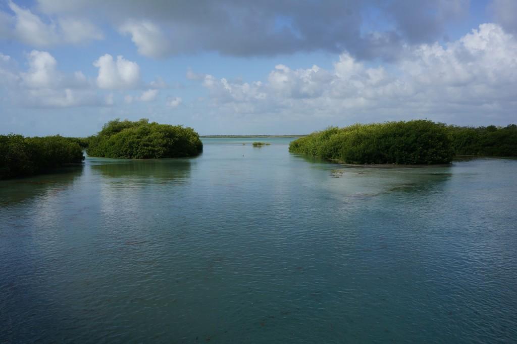 La Reserva Ecológica de Sian Ka'an es una de las más importantes del país (Foto: Flickr)