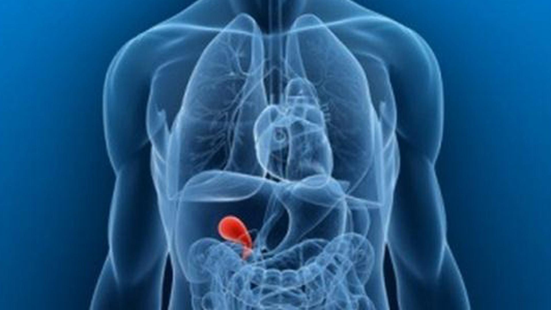 que funcion cumple la vesicula biliar en el cuerpo humano