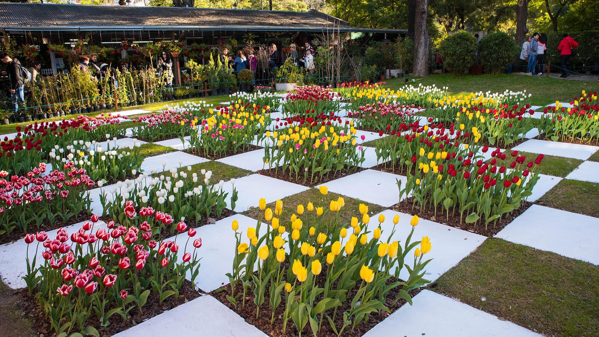 Los ejemplares locales fueron plantados en unmosaico estilo damero organizado por color