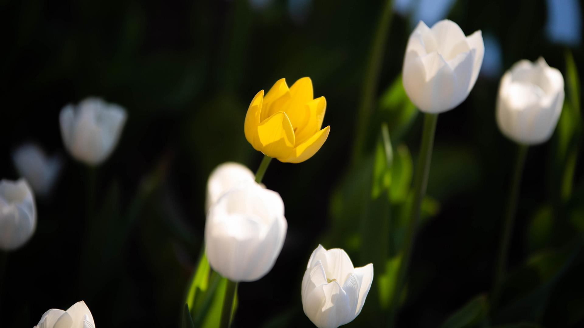 Las flores brotaron a mediados de julio y su ciclo de vidase extiende por ocho semanas