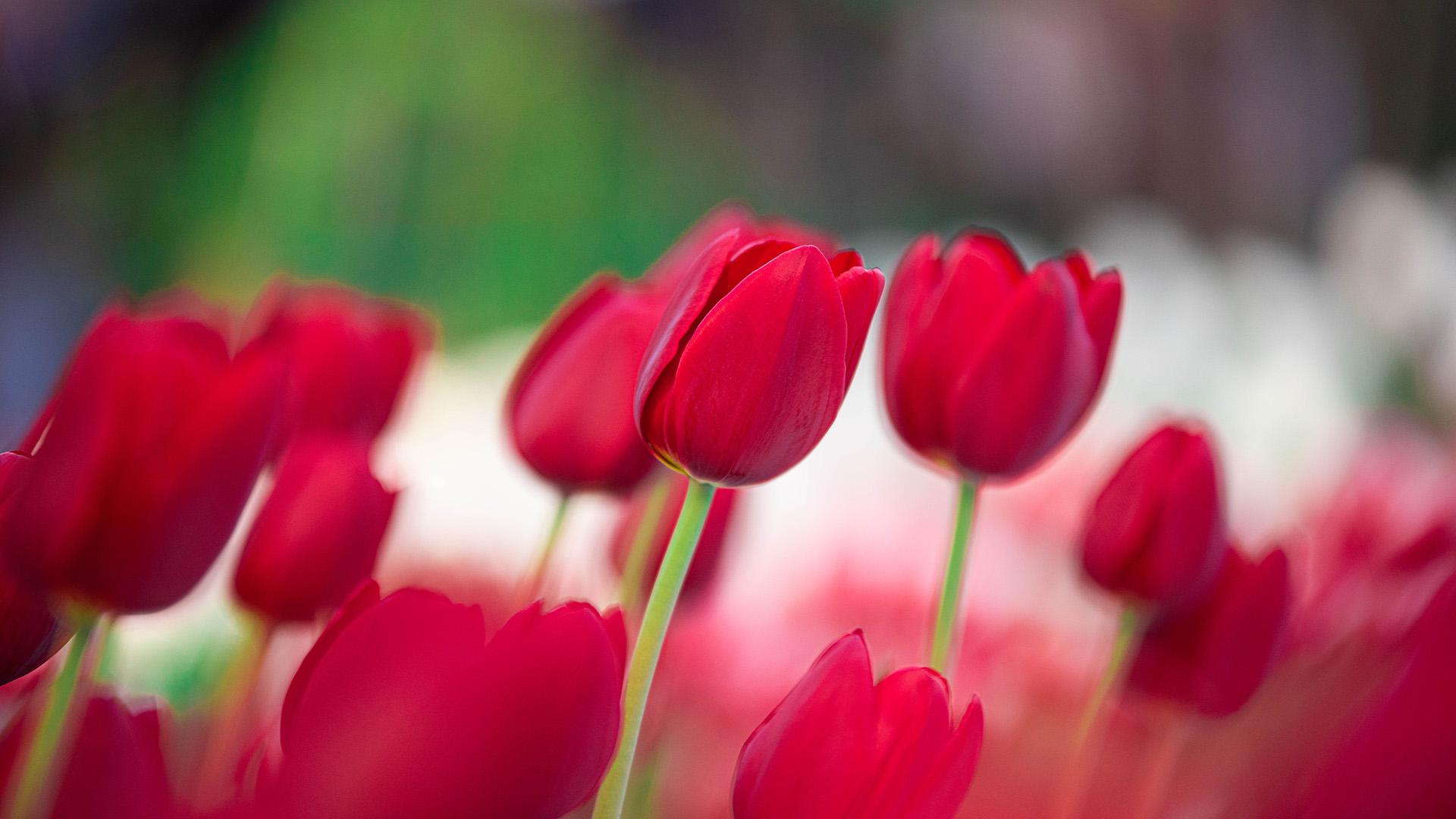 Las exóticas flores -en este caso de origen local- son un símbolo de prosperidad. Alrededor del mundo existen más de tres mil variedades