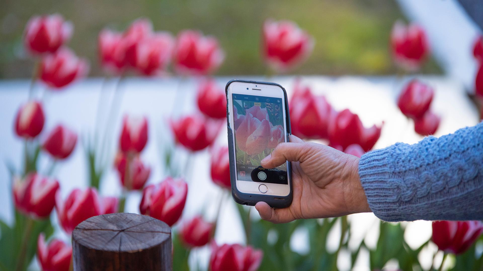 """La """"tulipomanía"""" atrae a los vecinos que se acercan a tomar sus recuerdos fotográficos"""