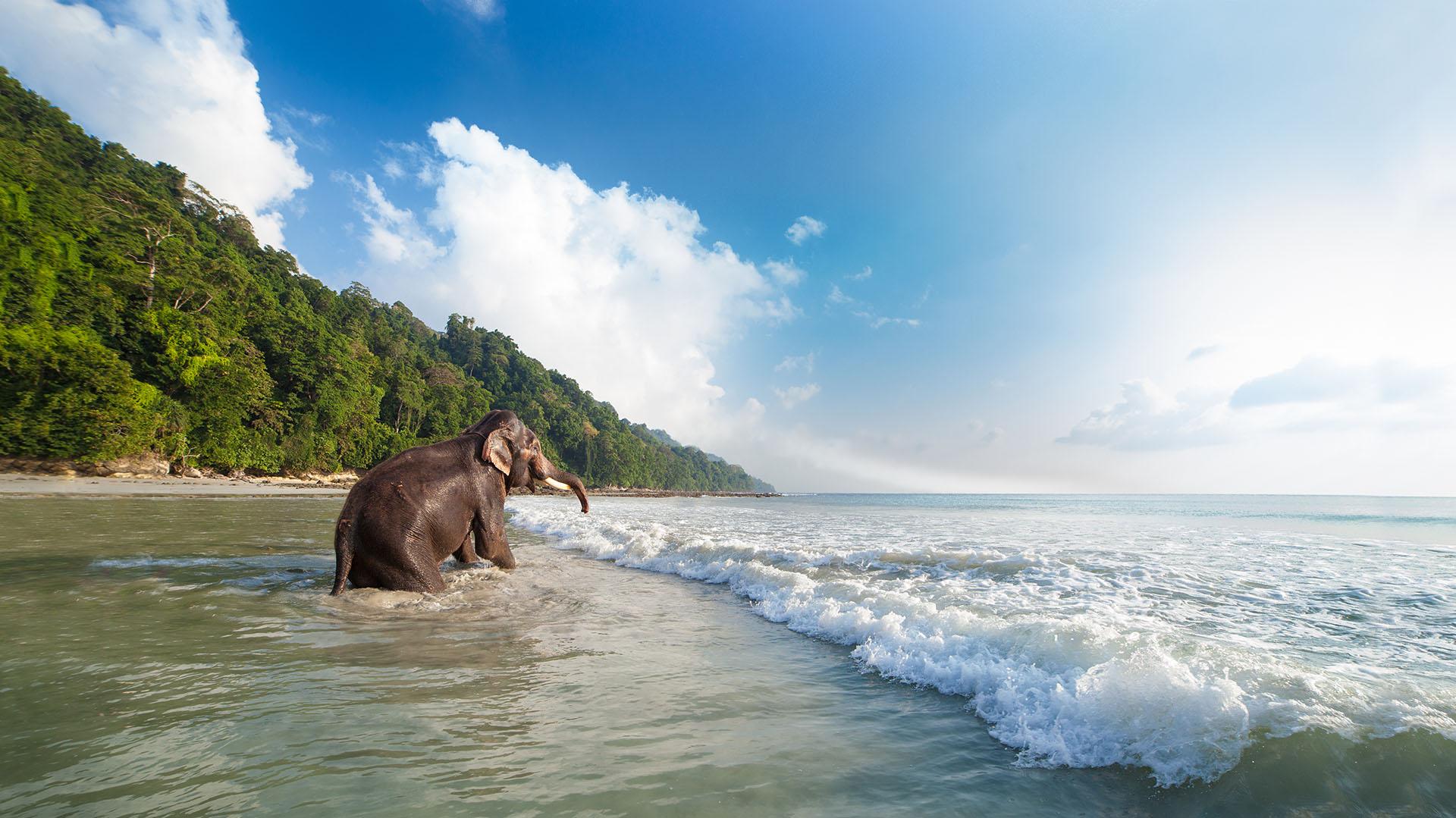 Para cualquiera que haya fantaseado con huir a una isla remota, las Islas Andaman son el lugar perfecto. Una cadena de más de 300 islas entre India y Tailandia, parecen casi demasiado perfectas para ser reales