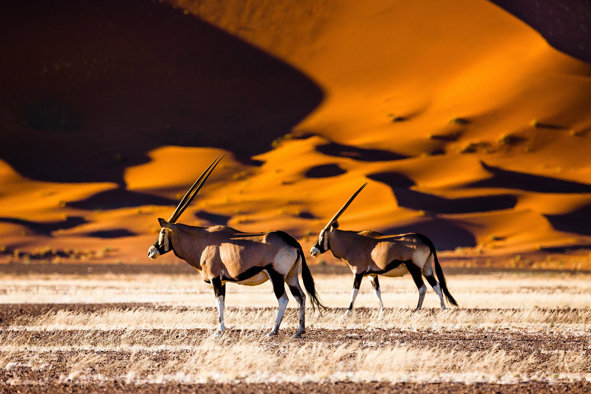 Pocos países en África pueden igualar la belleza natural de Namibia. El nombre del país deriva de su desierto más antiguo (y el del mundo), el Namib, y hay pocos reinos desérticos más emocionantes en el planeta
