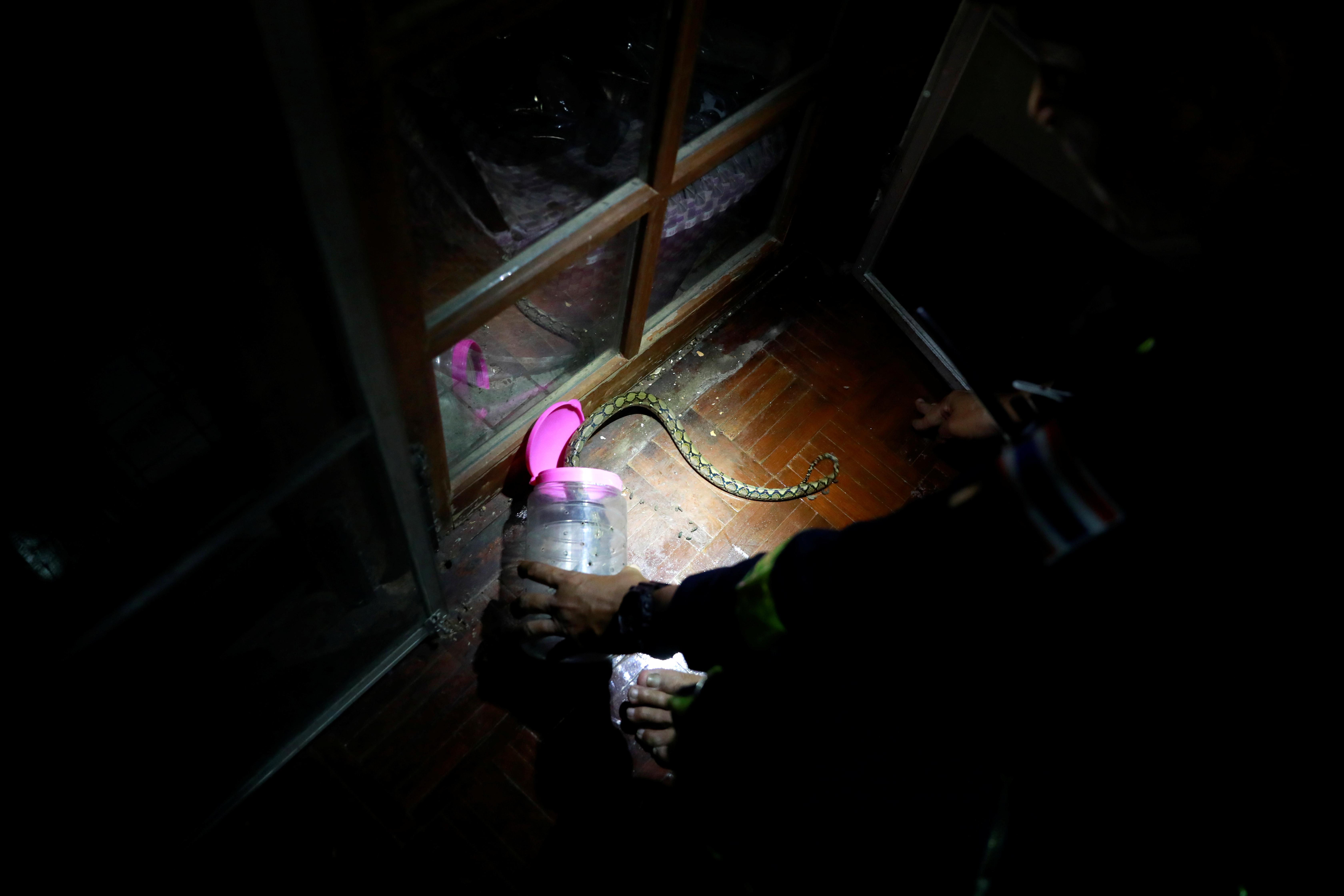Las serpientes se esconden en muchos hogares en la capital tailandesa y entran en jardines o baños durante la temporada de lluvias en busca de comida