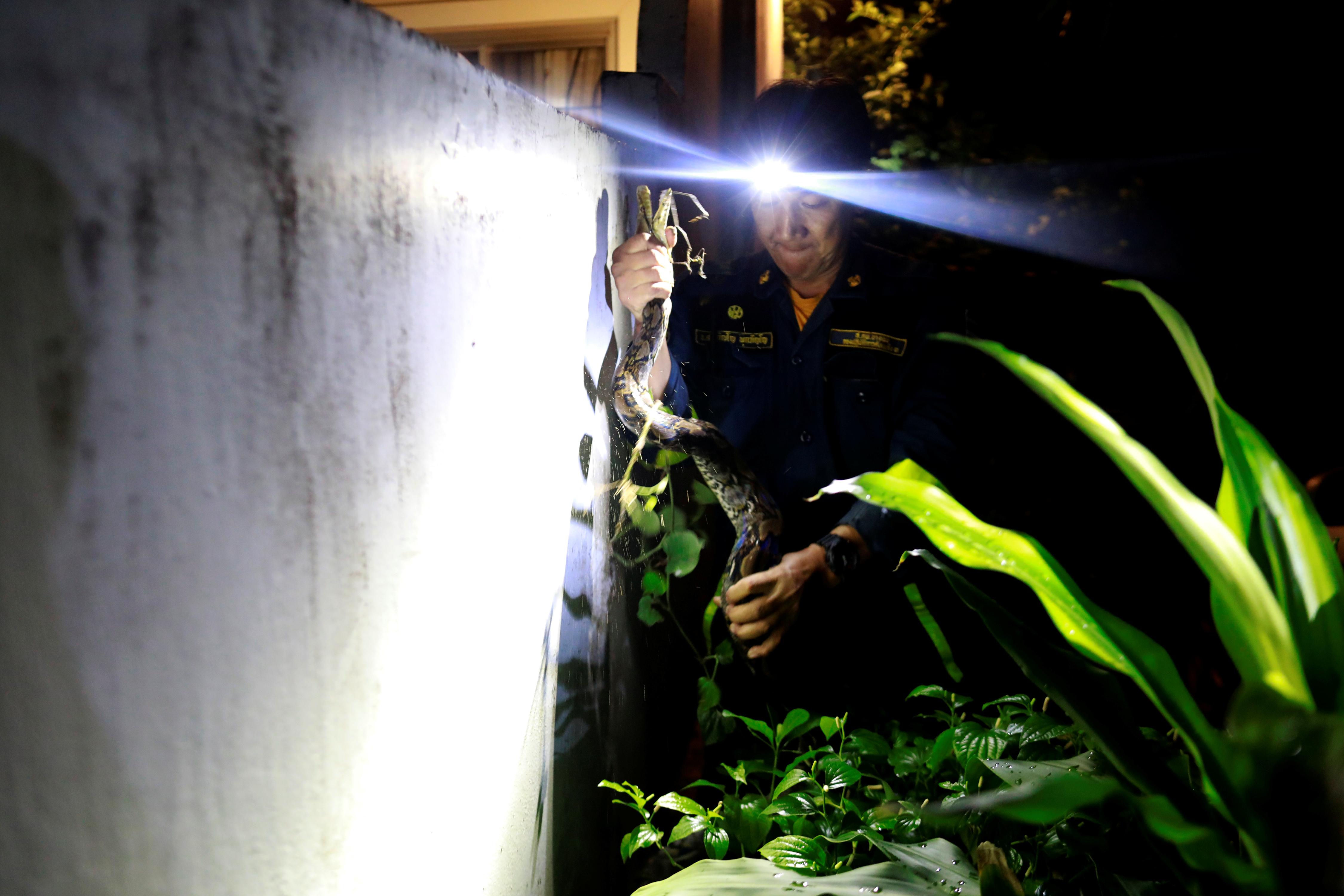 Pukpinyo atrapa una pitón en una casa tras un llamado de emergencia