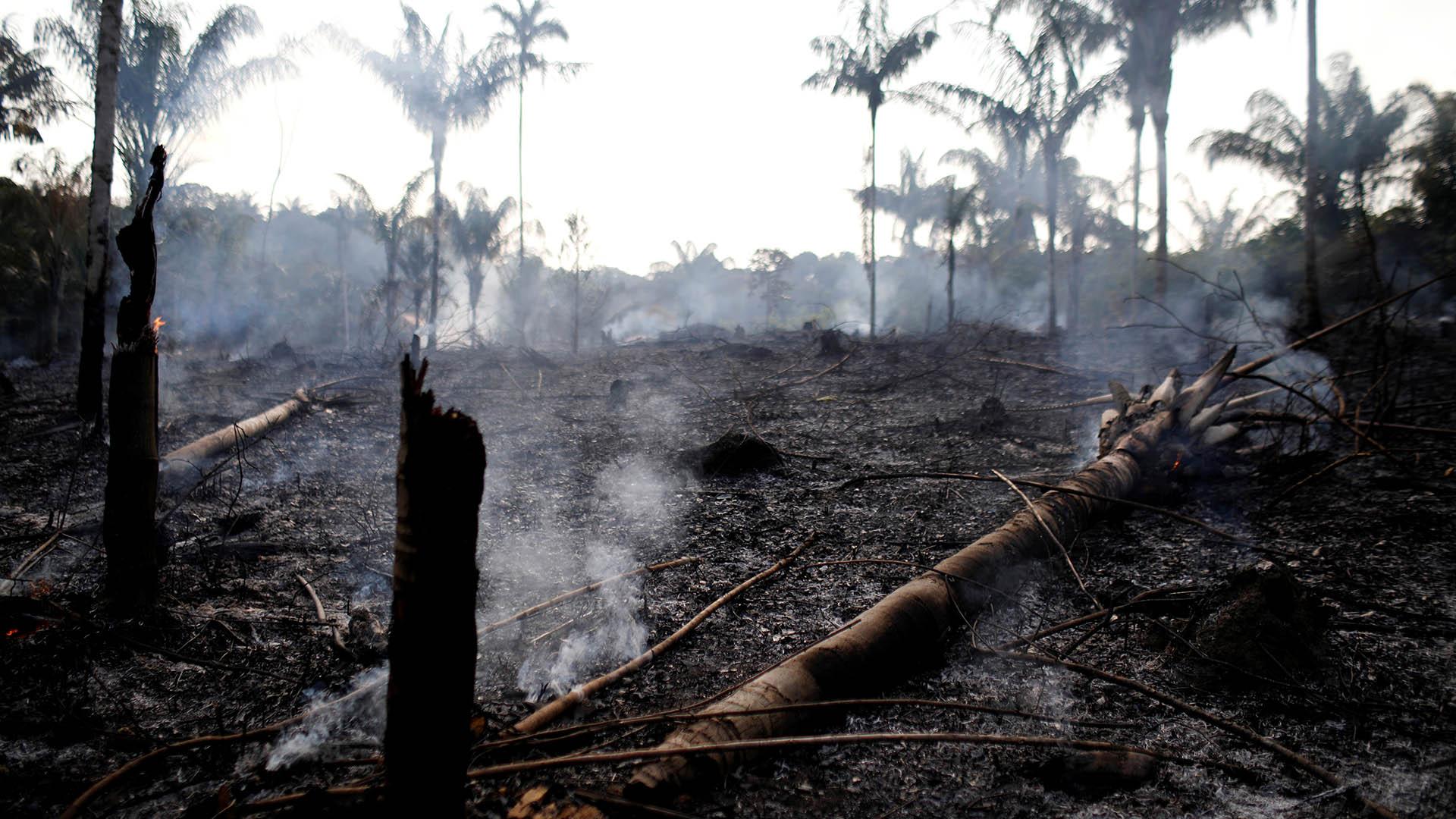 El fuego arrasó varios sectores de la Amazonía (Reuters/ Bruno Kelly)