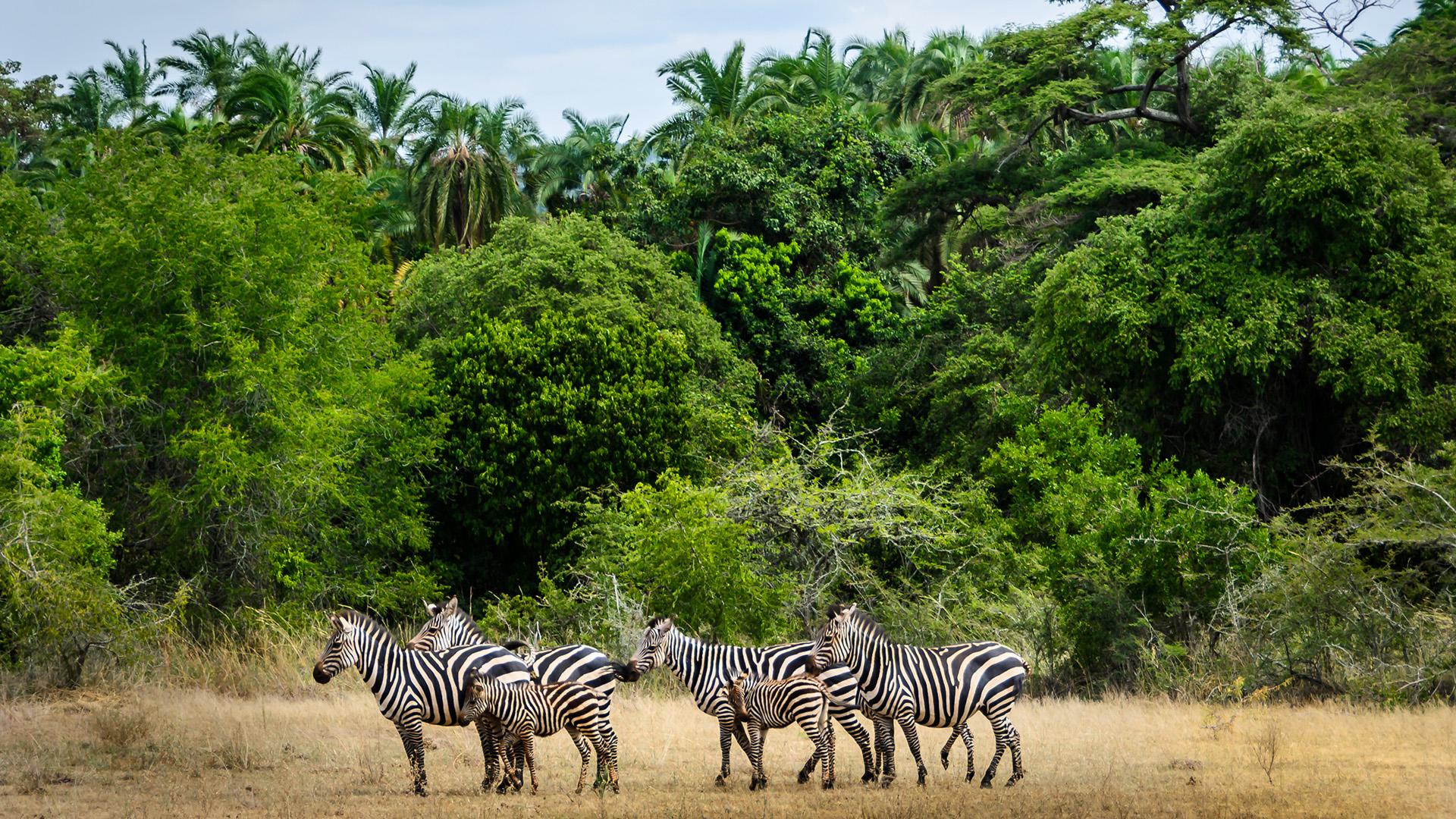 El año pasado, Ruanda fue nombrada un nuevo destino de lujo africano por Luxury Travel Mag. El destino tiene que ver con la naturaleza y la vida silvestre, y es hogar de tres parques nacionales: Akagera, Nyungwe y el Parque Nacional de los Volcanes