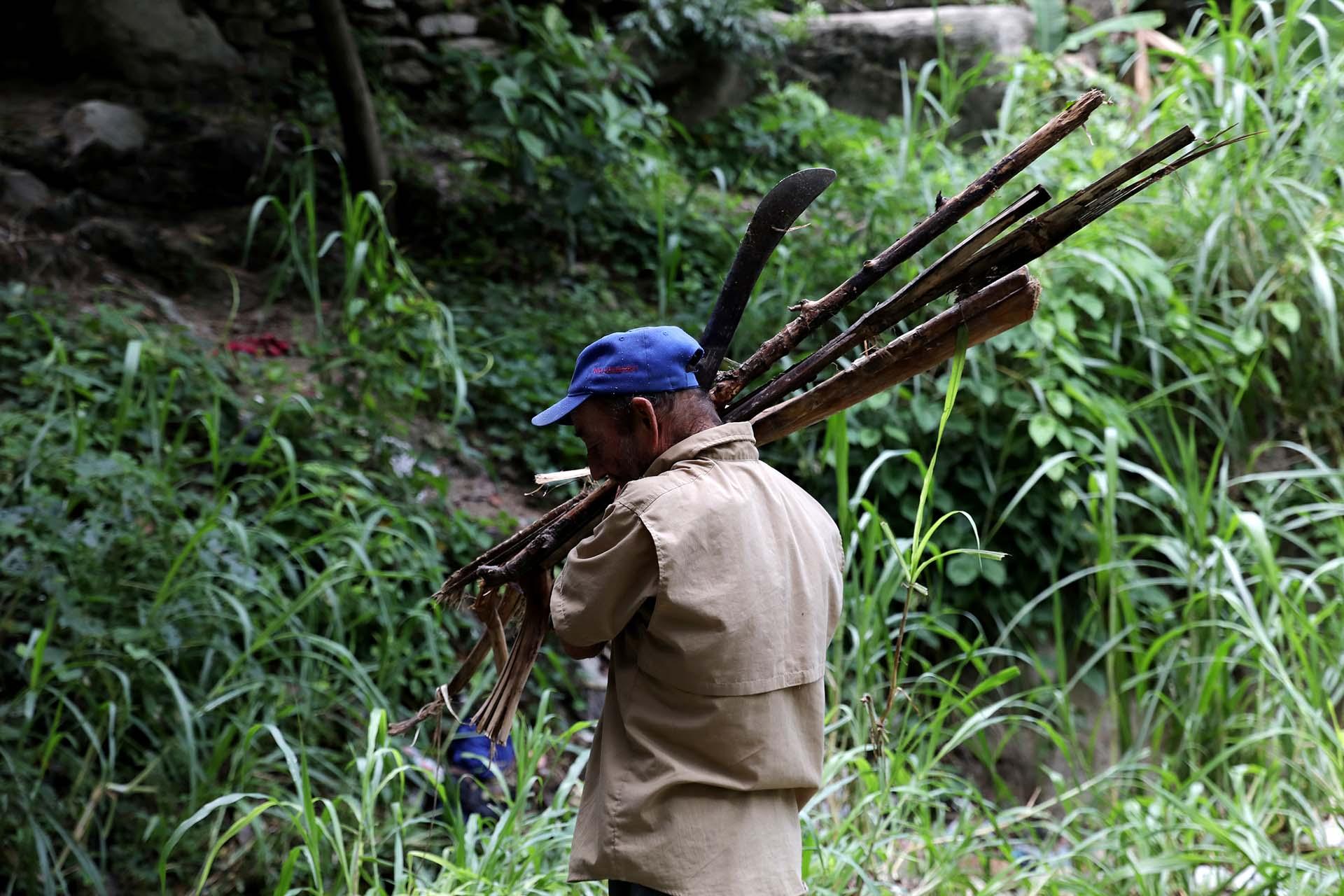 Jorge Asquiles transporta leña recolectada en el Parque Nacional Henri Pittier en Maracay, Venezuela, el 14 de agosto de 2019 (REUTERS/Manaure Quintero)