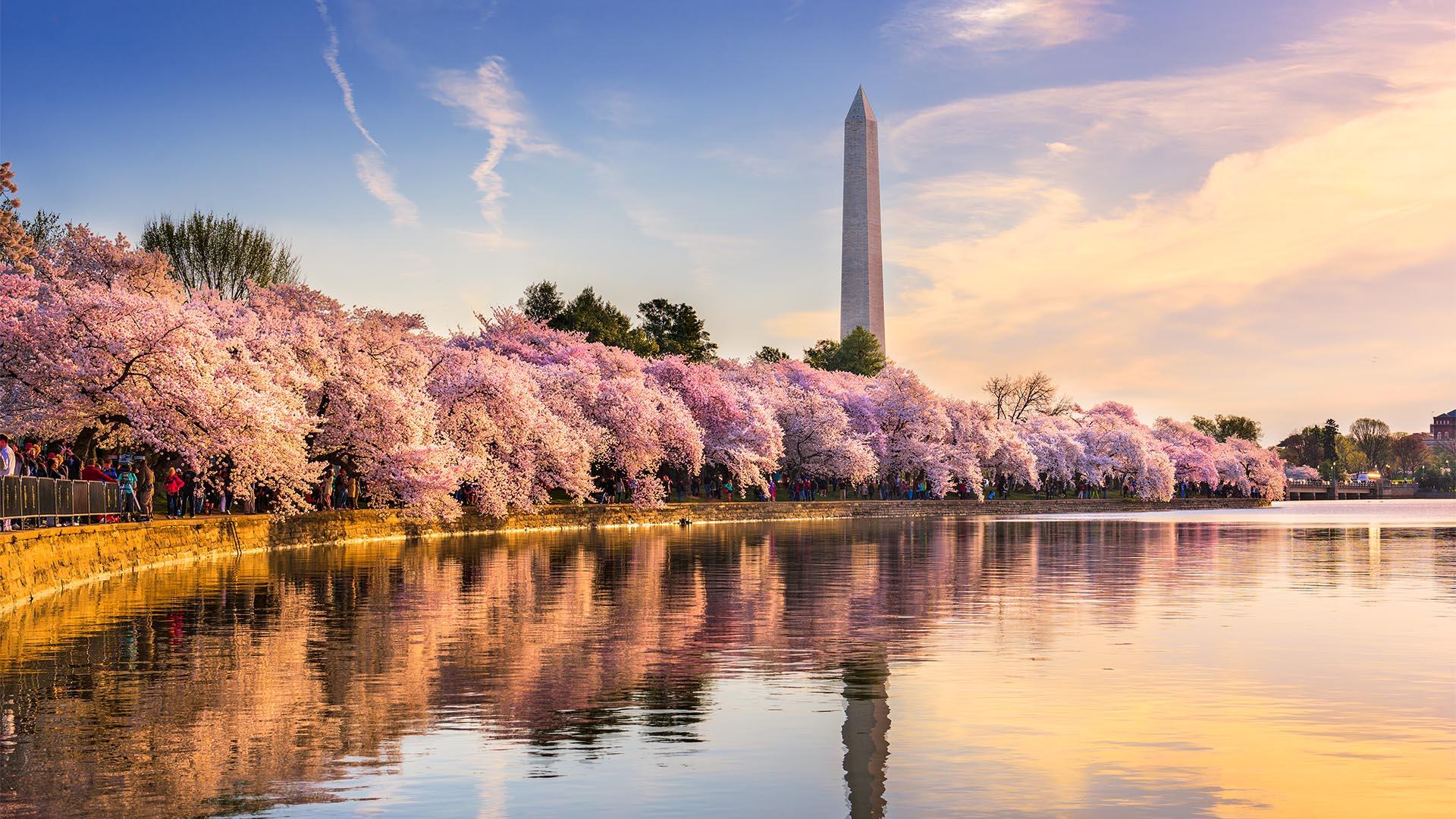 La capital de los Estados Unidos está repleta de monumentos emblemáticos, vastos museos y los pasillos del poder donde deambulan los políticos. Washington DC es una ciudad segura en general