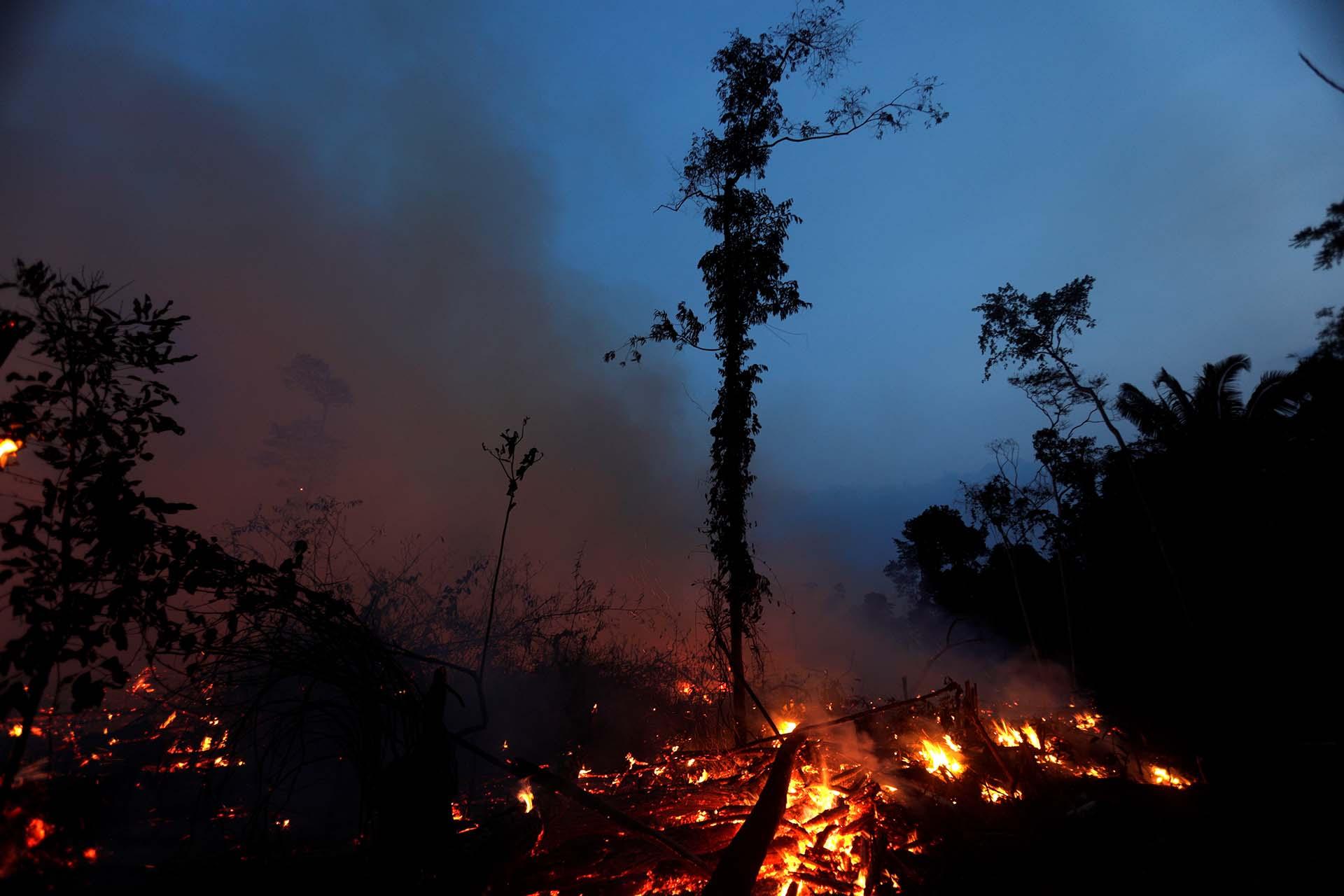 En los últimos 33 años, el Amazonas perdió 47 millones de hectáreas