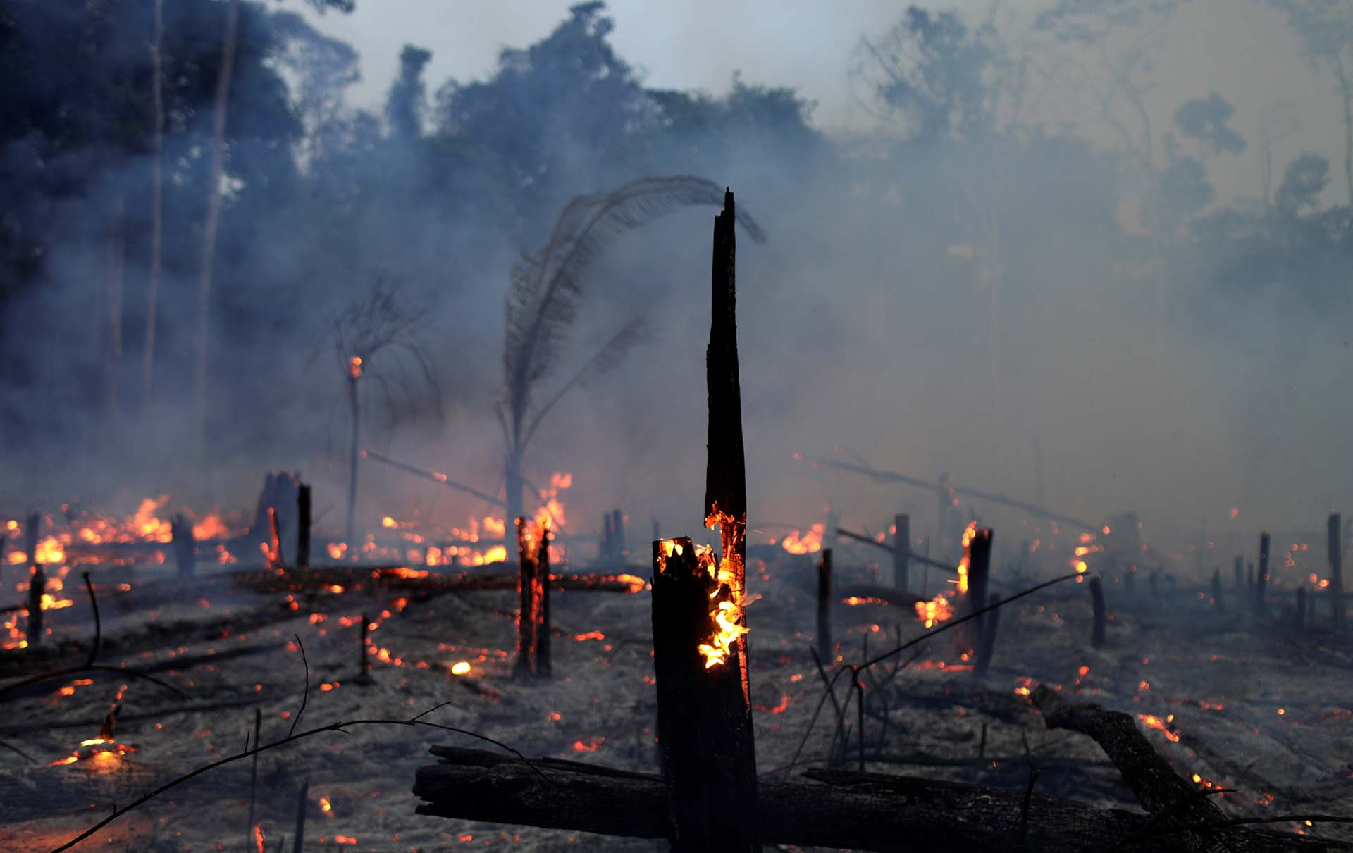 El mundo se mostró conmovido por los incendios en el Amazonas