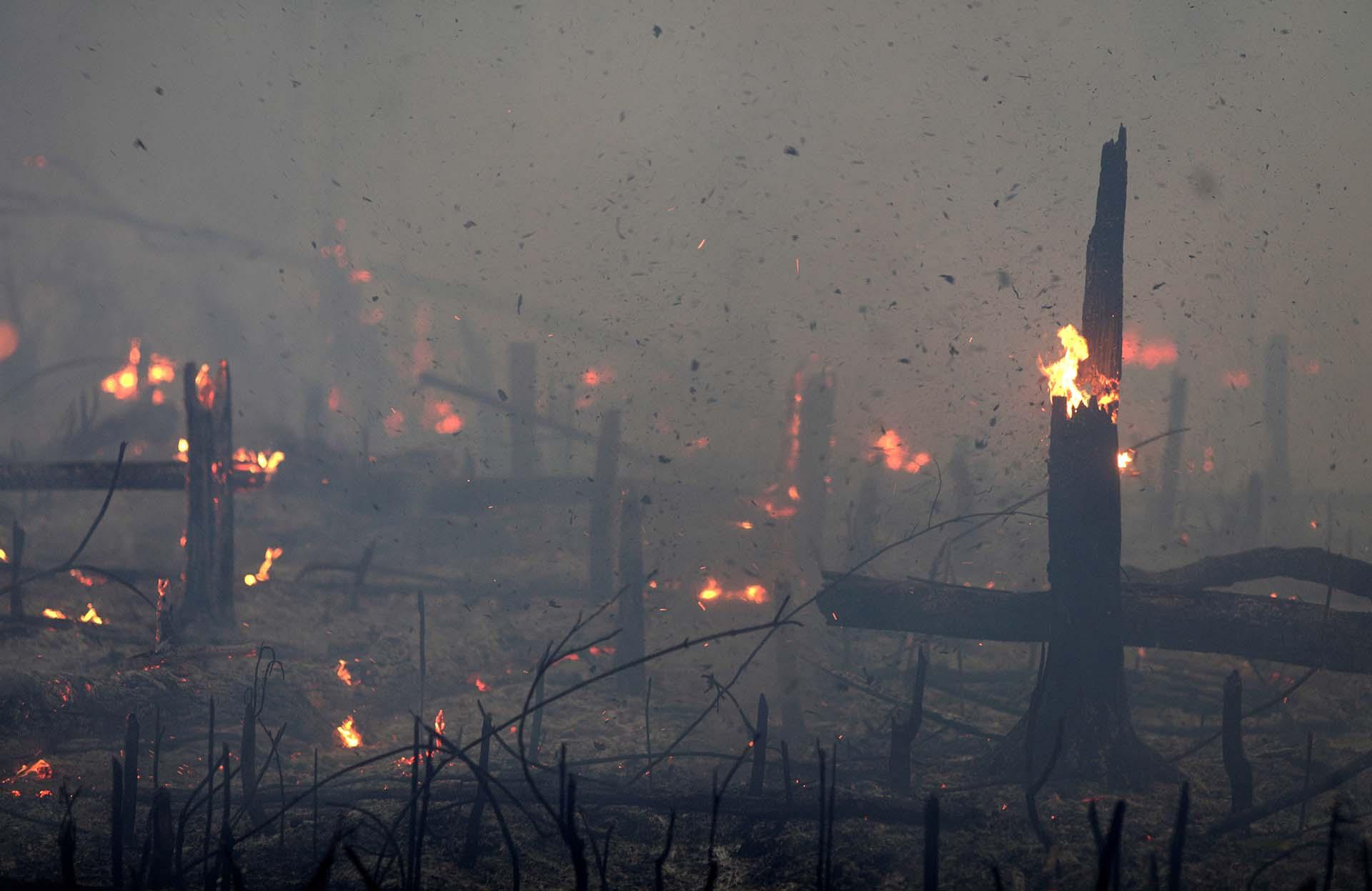 Miles de incendios se registraron en las últimas semanas en el Amazonas
