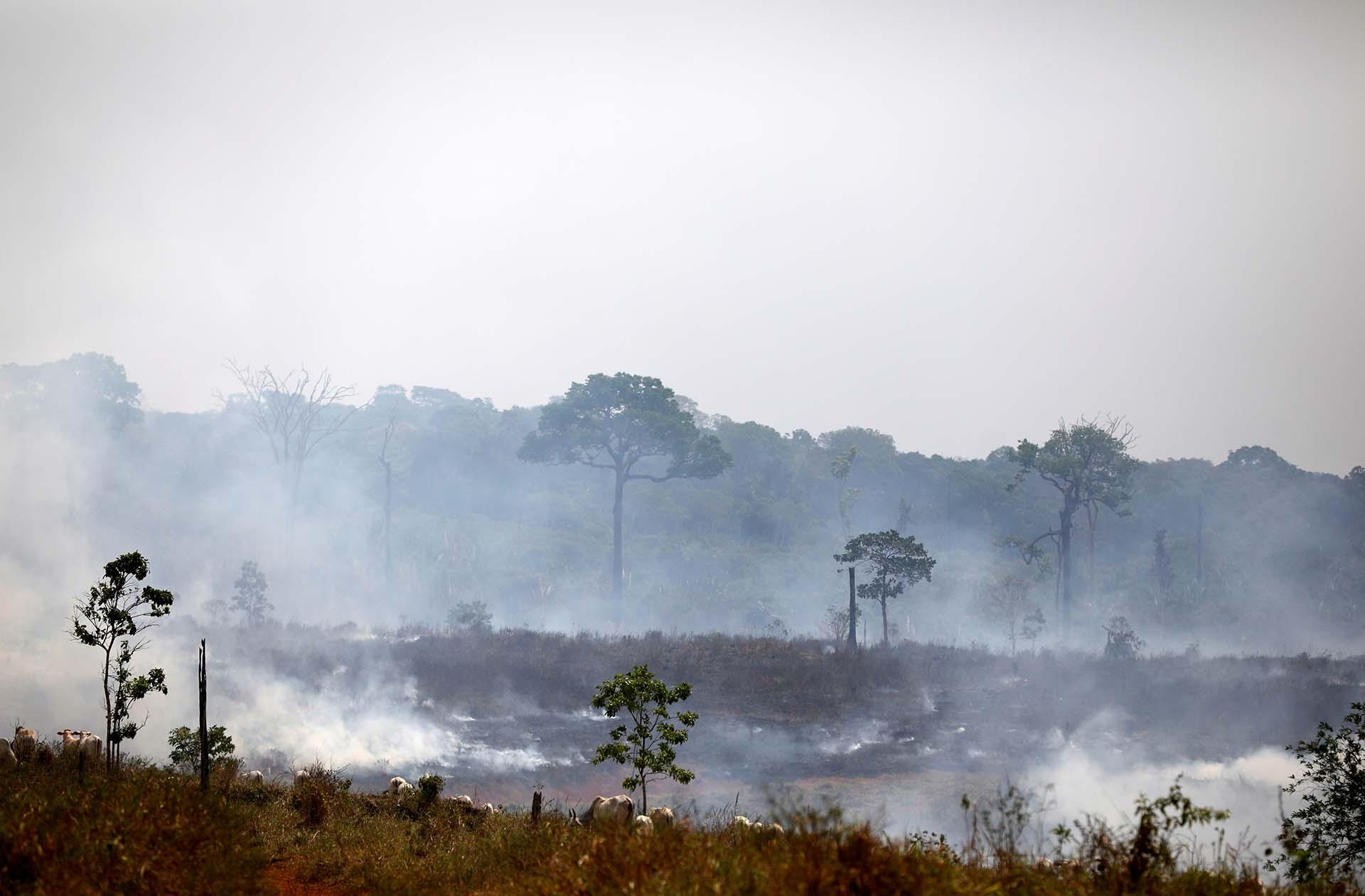 Una parte de la selva en Apui, estado de Amazonas, quedó cubierta de cenizas