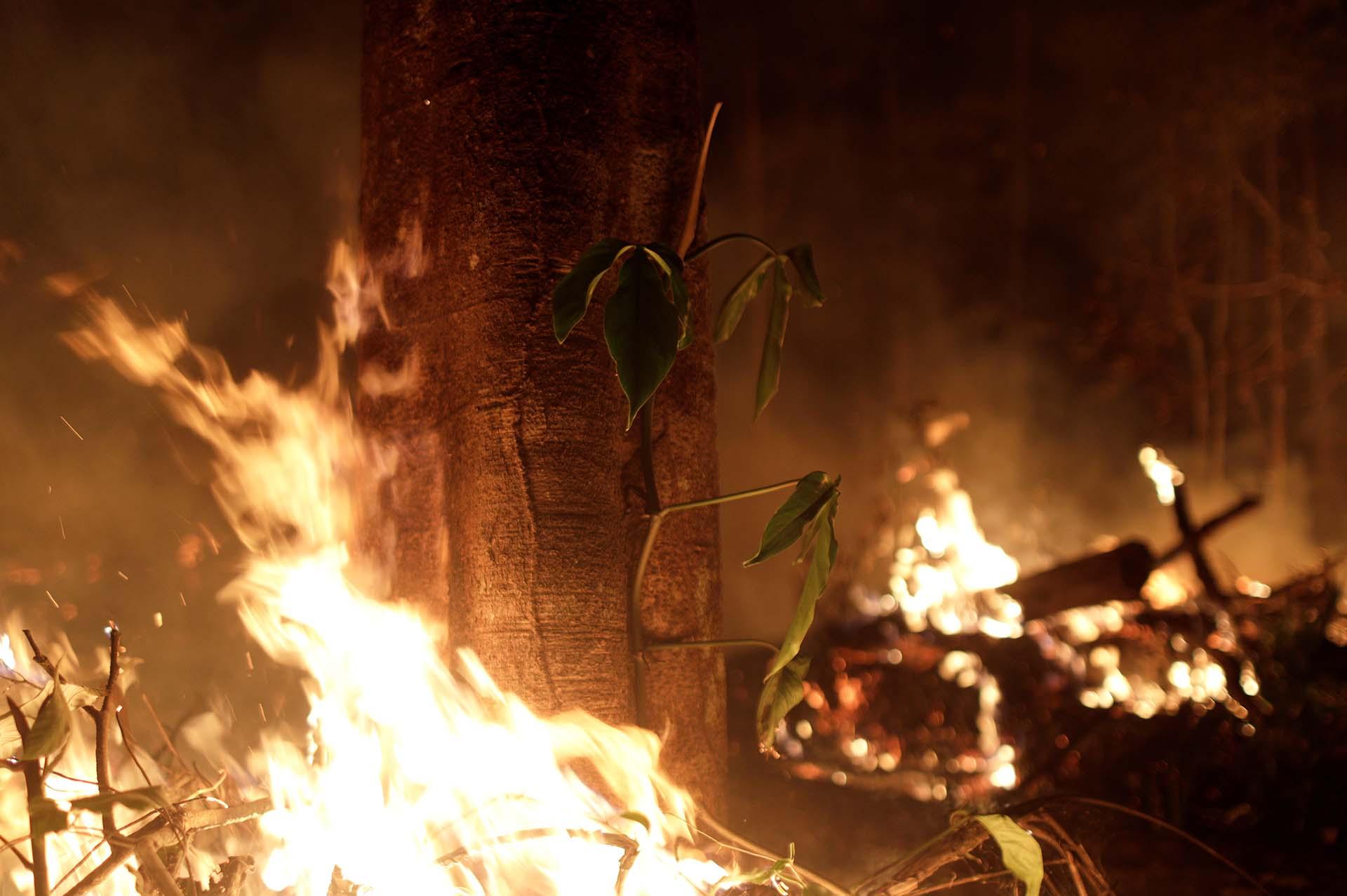 Miles de árboles fueron quemados por los intensos incendios