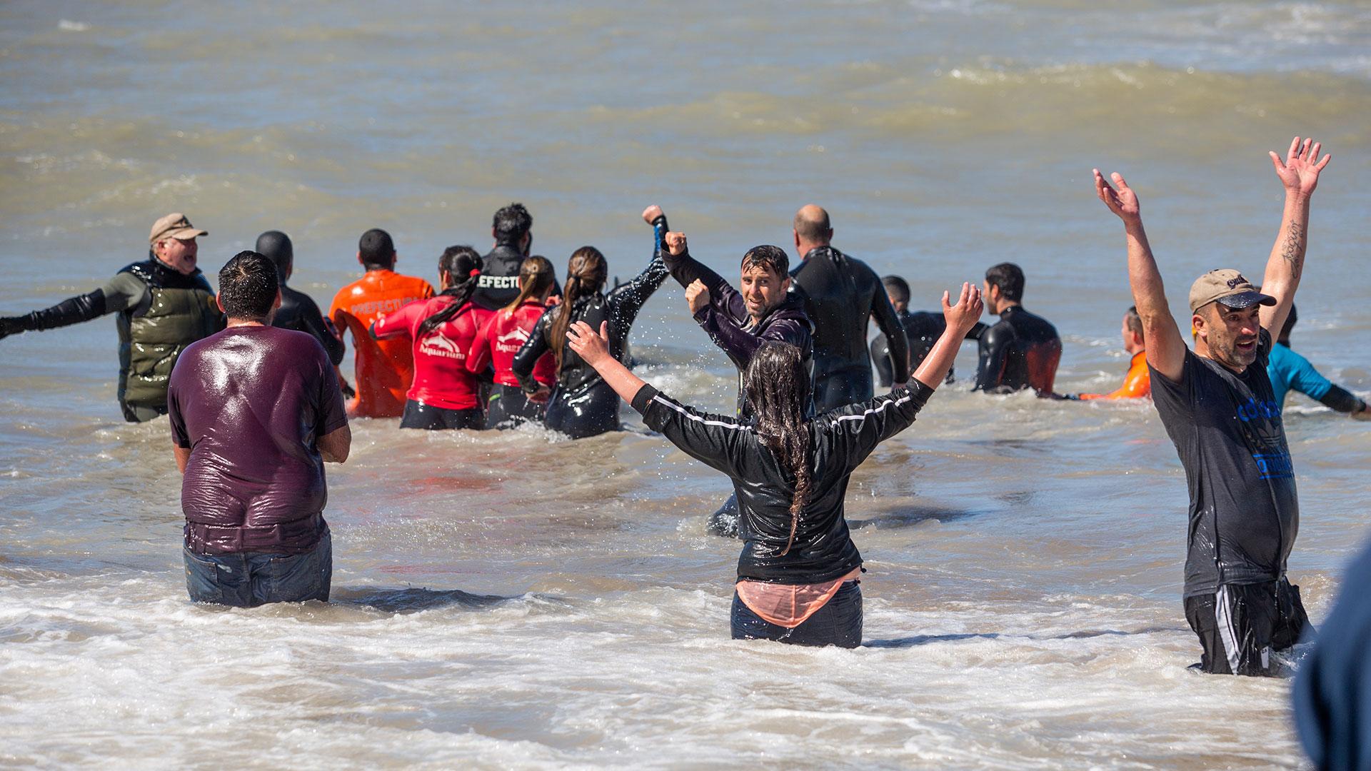 De las siete orcas varadas, finalmente pudieron devolver a seis al mar y una murió