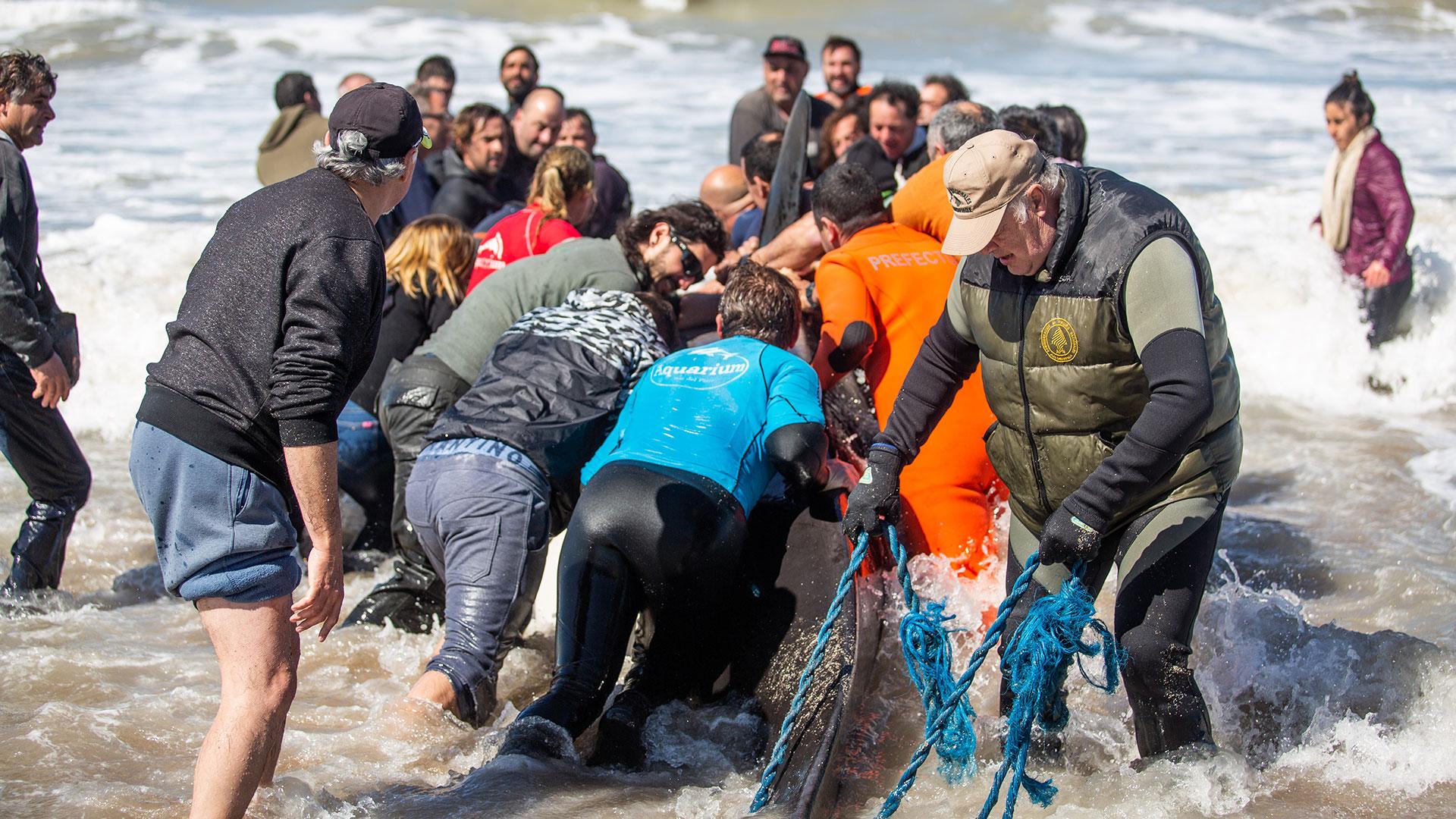 Los voluntarios que asistieron al operativo de rescate fueron vecinos, jóvenes de colegio, biólogos de la Universidad de Mar de Plata, guardavidas, miembros de Defensa Civil, bomberos de destacamentos de Santa Clara del Mar y Costa Norte y personal especializado de Prefectura
