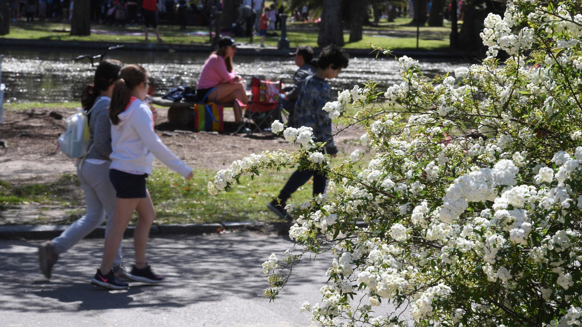 Algunos árboles ya florecieron, otros todavía están a punto de sacar su primer capullo en los próximos días