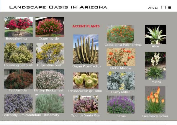 Image Landscape Oasis in Ari... (2)