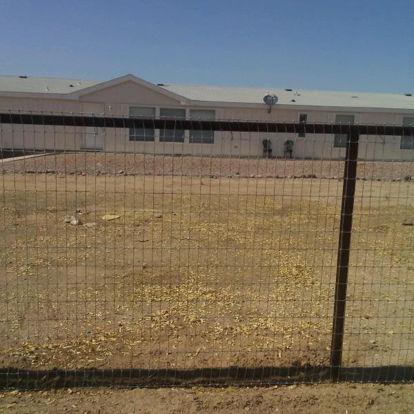 Image Landscape Oasis in Ari... (1)