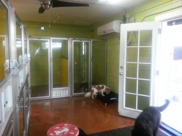 Image Dog Daycare Interior f... (1)