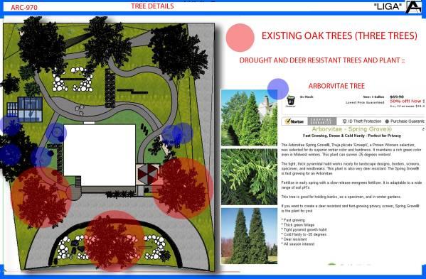 Image TREE DETAILS