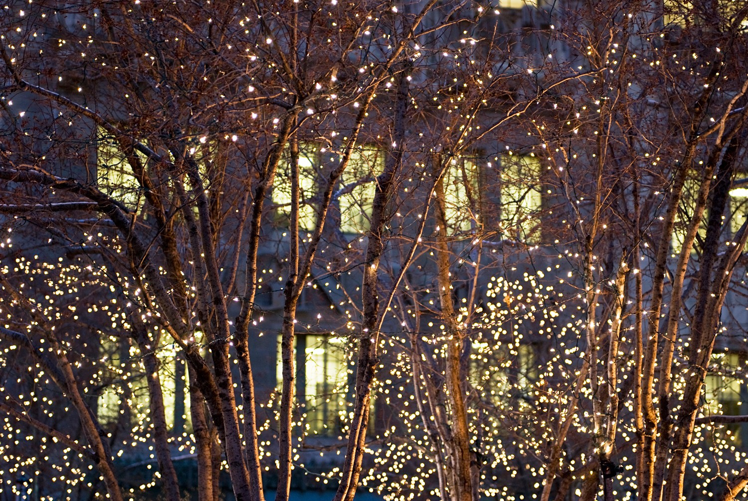 Holiday Lights City Lights 183 Tours 183 Chicago Architecture Foundation Caf