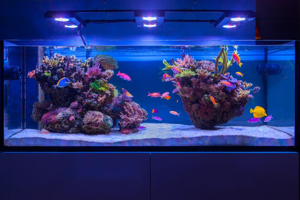 Aquascaping. - Reef Keeping - Austin Reef Club