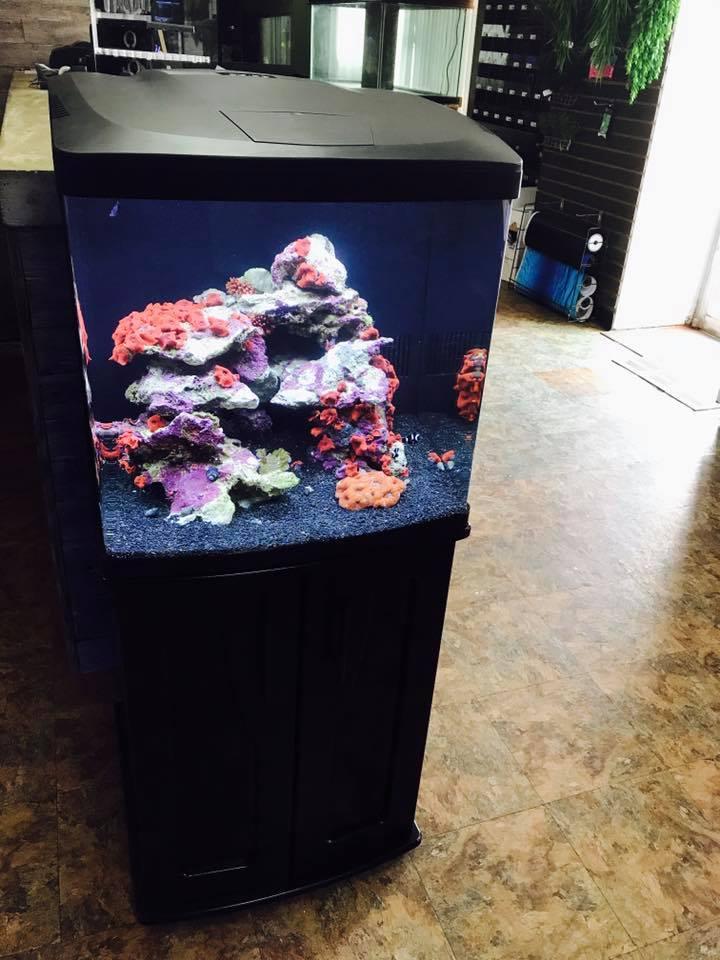 Coralife Biocube 32 River City Aquatics Austin Reef Club