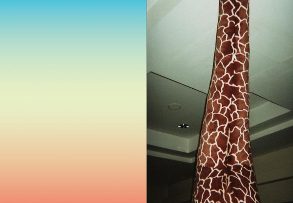 photography colors nature animal giraffe