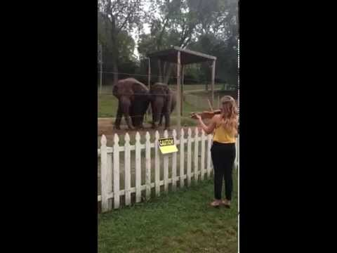 Me warming up for my performance of the Bach Concerto for Two Violins with the Wisconsin Chamber Orchestra at the Circus World Museum in Baraboo, WI. I decided to go outside and play a bit for Kelly and Viola, 44 and 45 year-old elephants that have lived together for most of their lives.