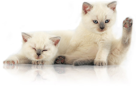 Flea medication for kittens