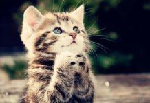 Прощение. 10 сильных практик