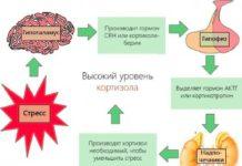 Как похудеть без диет: снижаем уровень кортизола в организме