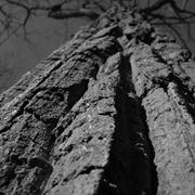 Treed_card