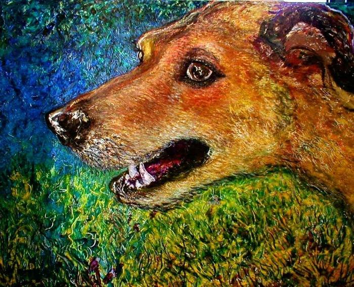 Timmy-the-wonder-dog_card