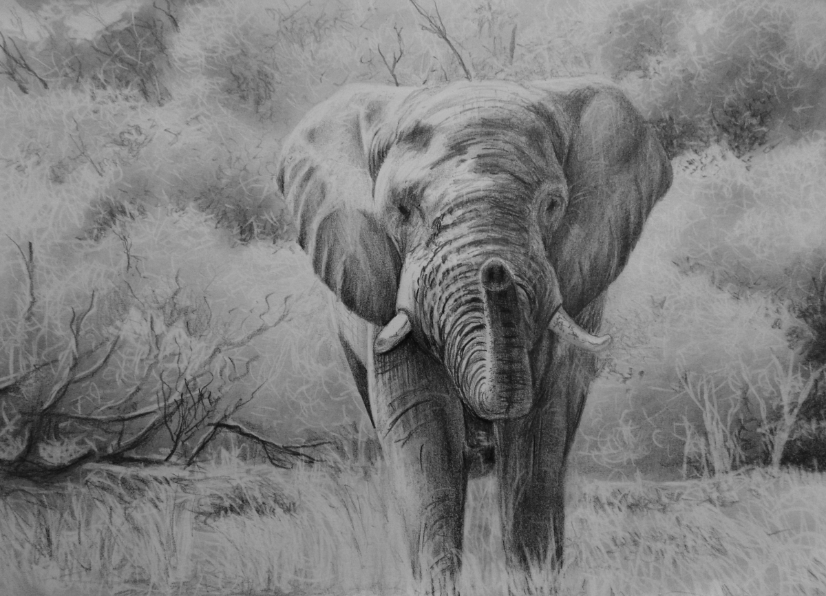 How to draw an Elephant – Background