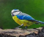 How to Paint Birds in Oil (Blue Tit)