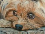 How to Paint a Yorkshire Terrier