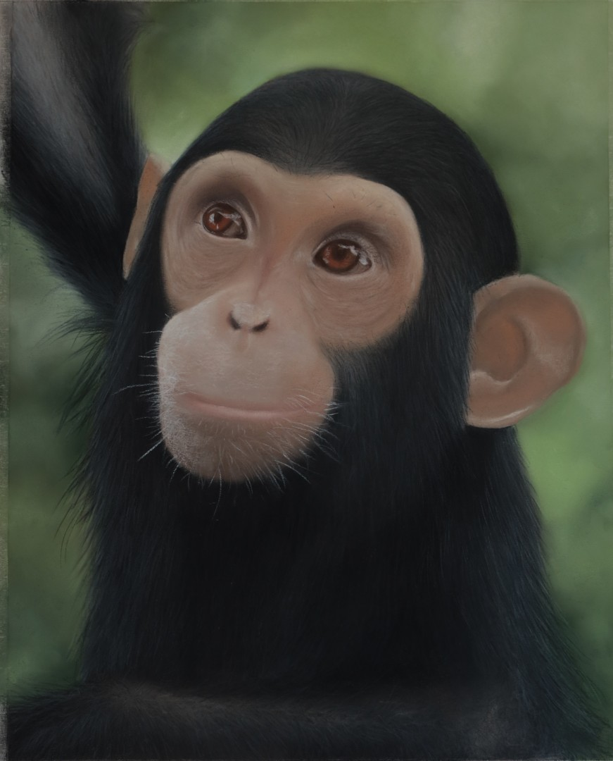 Cherishing Our Chimpanzees