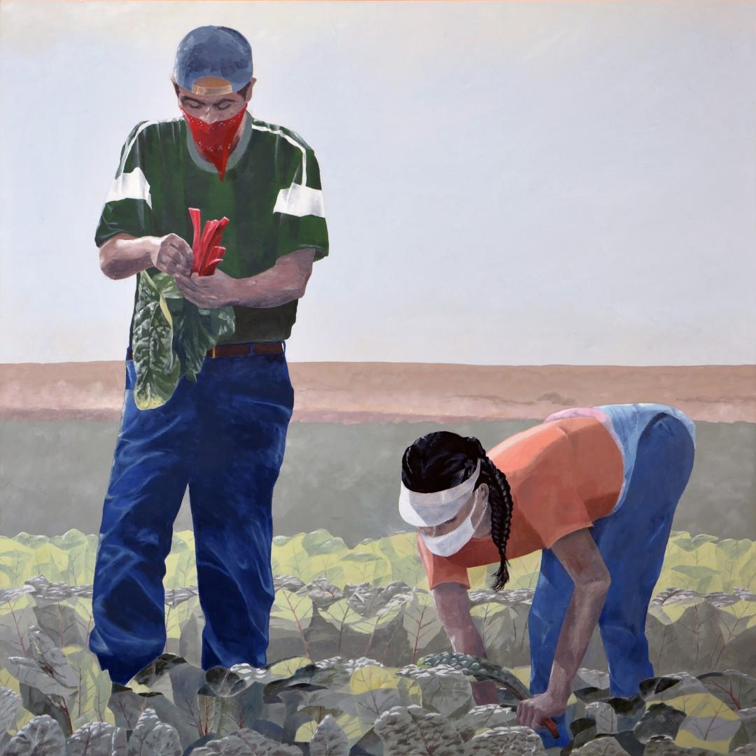 Harvesting Chard, Ledesma Farm, Gustine