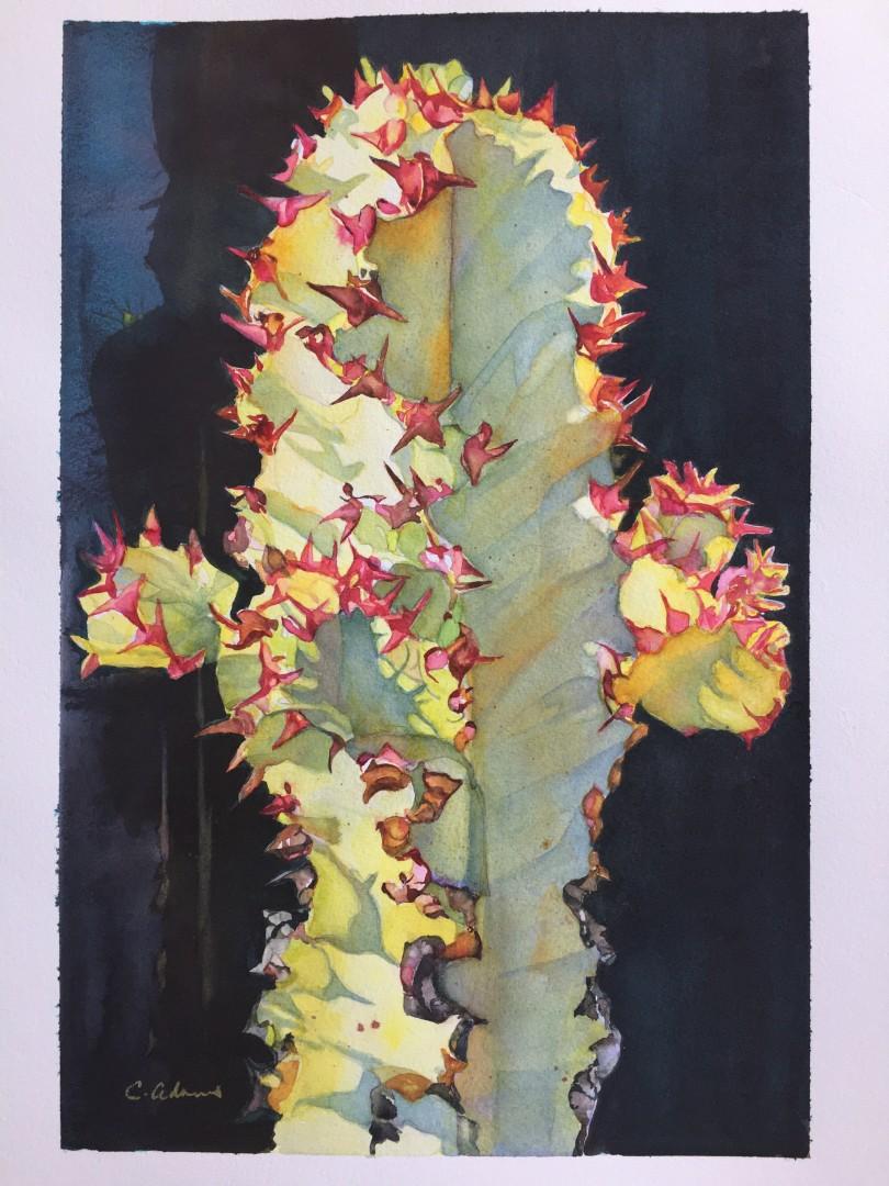 Street Cactus