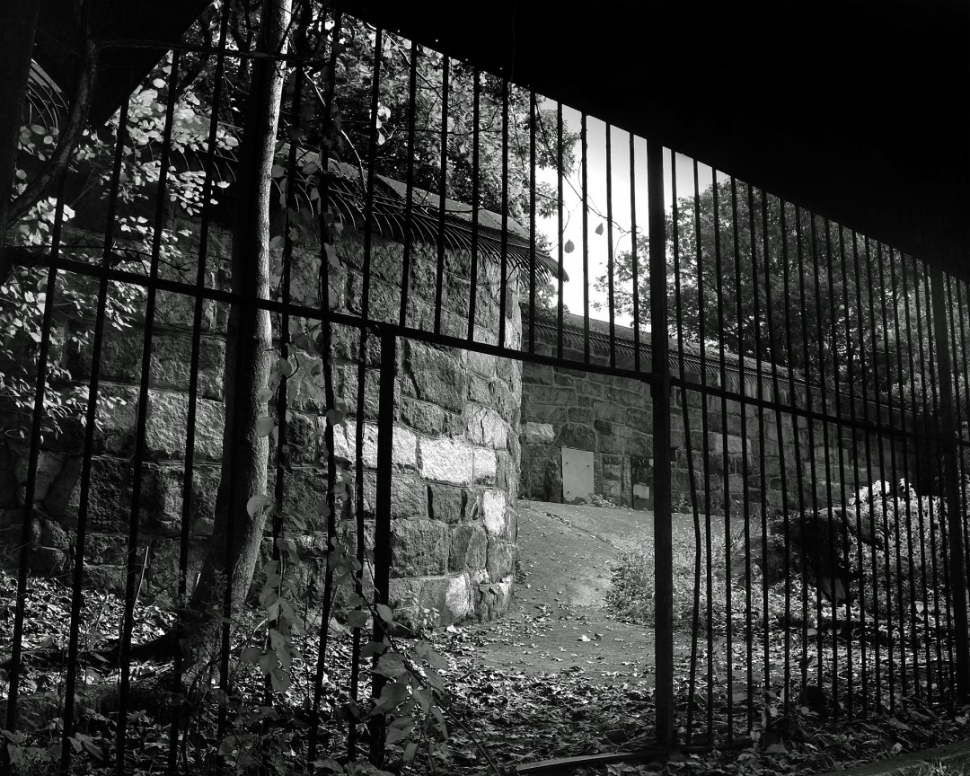 Abandoned Cages