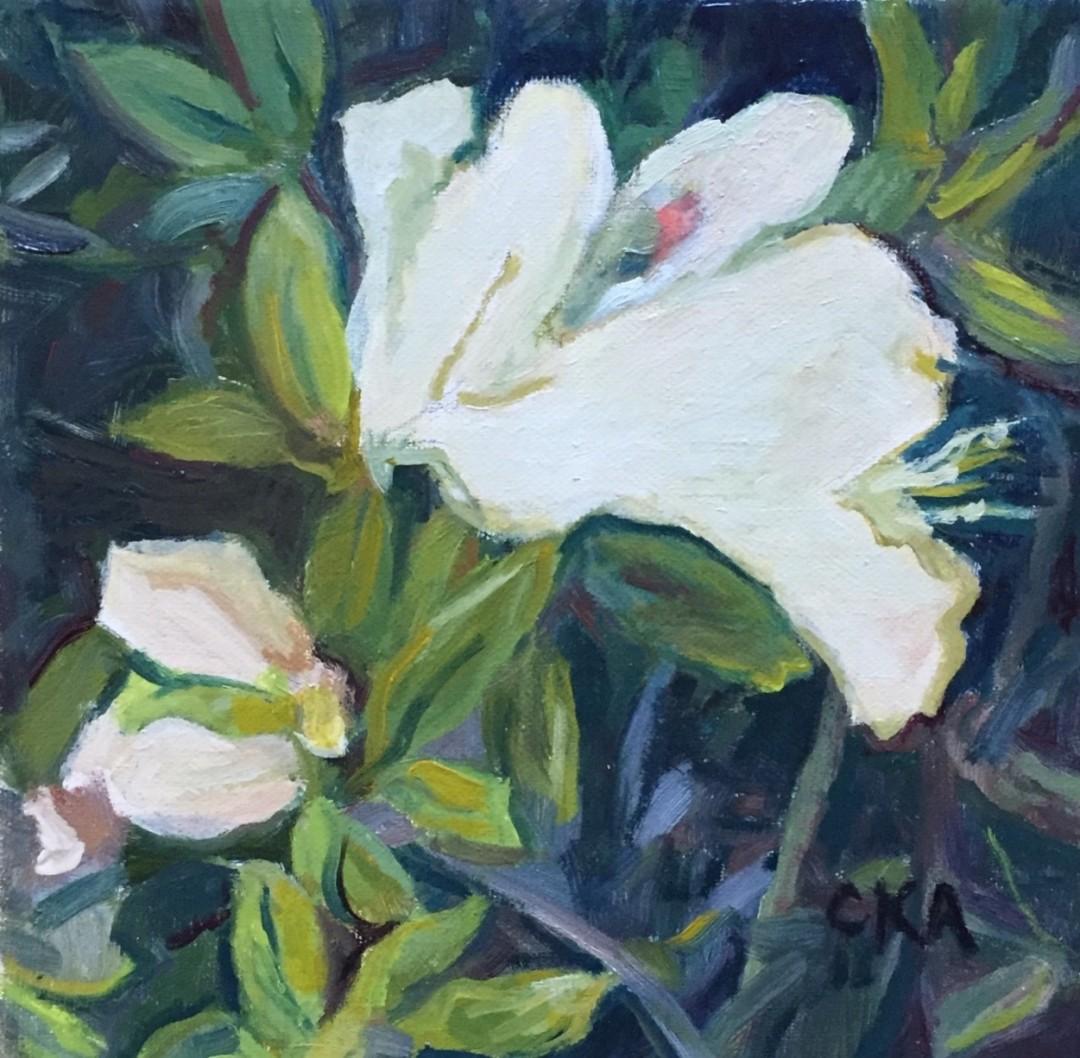 Early Spring White Azalea