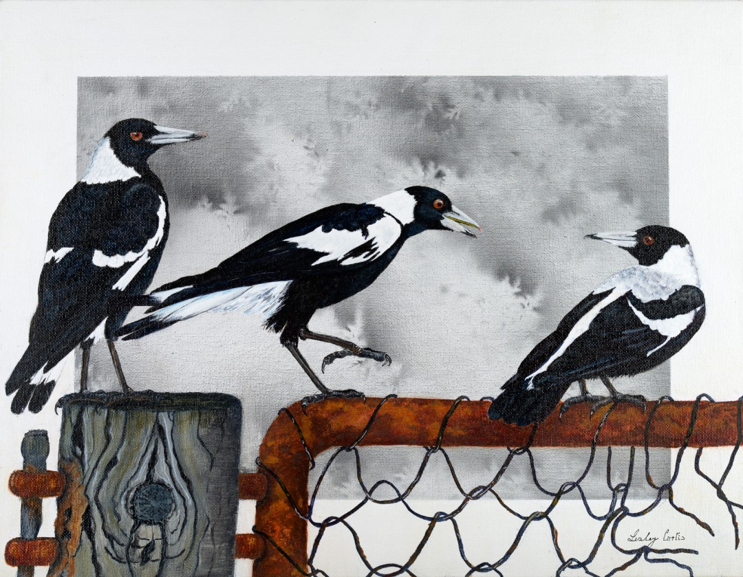 "Australian Magpies ""At the Farm Gate"""