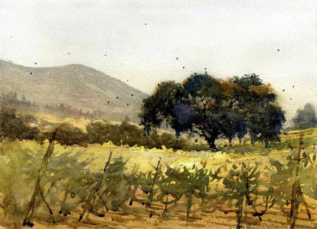 Sonoma Mountain Vineyard