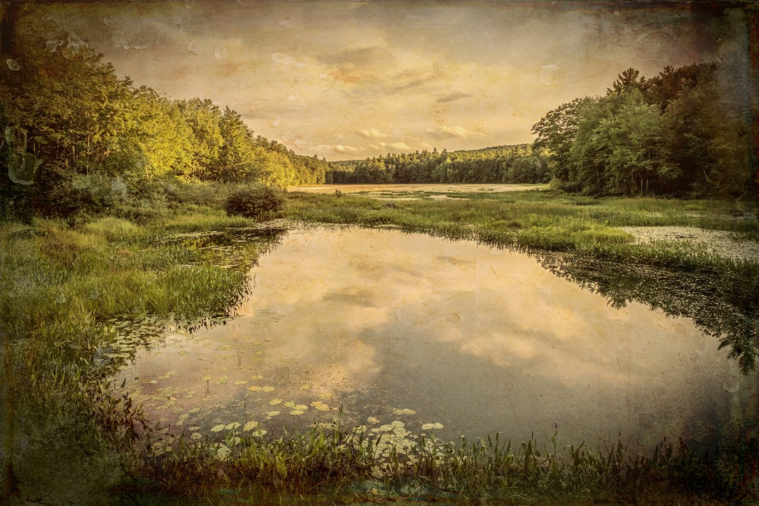 A Small Roadside Pond